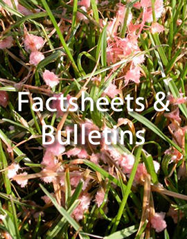 link to factsheets and bulletins